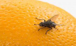 Cómo Deshacerse de las Moscas de la Fruta Naturalmente